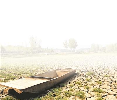 全省受旱面积为2583万亩 河南农民含泪铲除绝