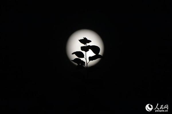 """最圆的""""超级月亮""""你看"""
