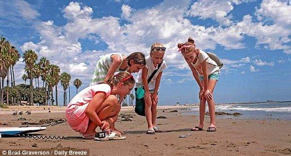"""美国海滩现大量神秘生物""""帆水母"""""""