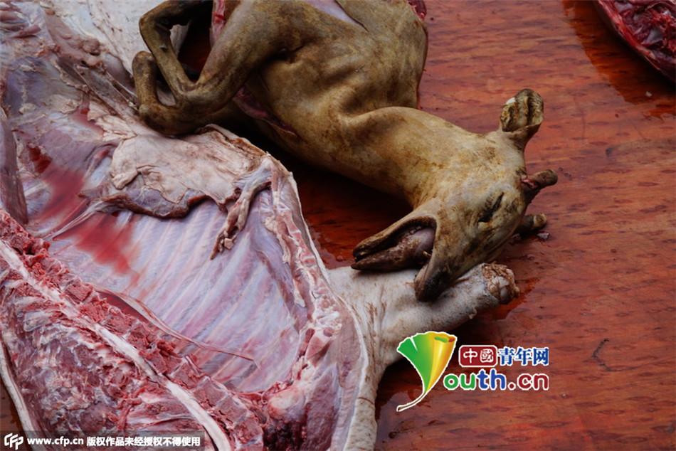 卖食用野生动物