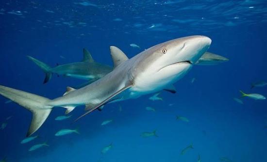 壁纸 动物 海底 海底世界 海洋馆 水族馆 鱼 鱼类 550_334