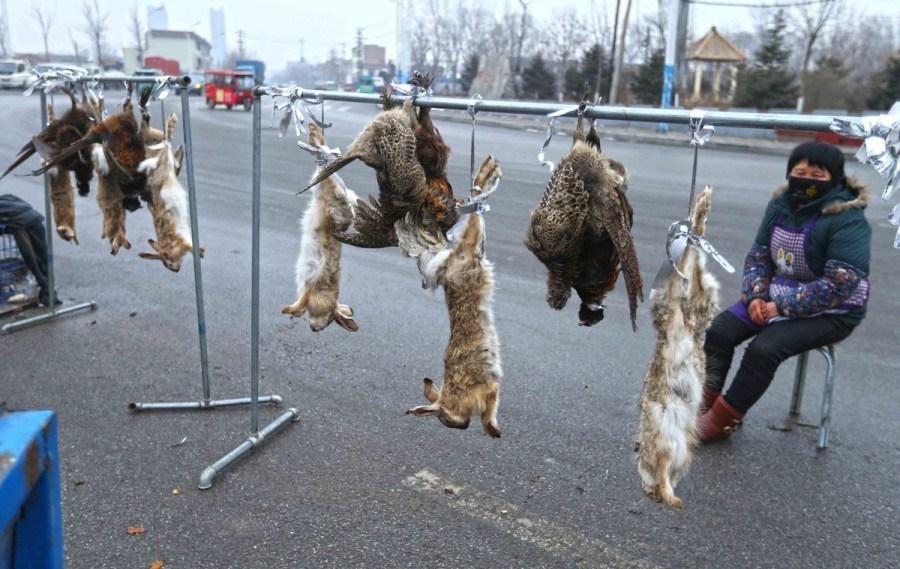 保定路边黑市兜售野生保护动物 提供现场宰杀
