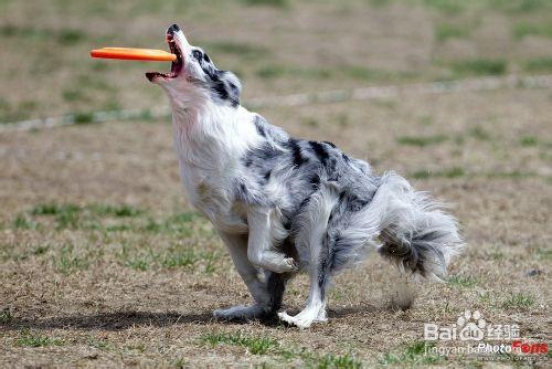 警犬排队吃饭照爆红 如何训练我们的狗狗?
