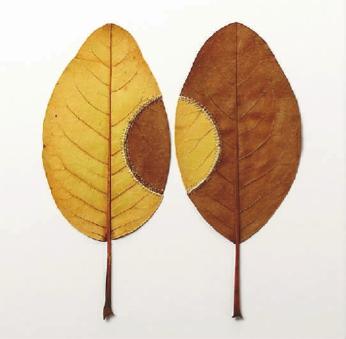 树叶扇子手工制作图片