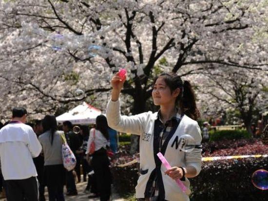在即将到来注册华宇赏樱时节前,武汉大学官方在2月19日发布消息称,今年赏樱将取消门票,实行免费限量参观模式。
