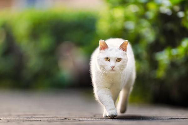 男人学一种动物走路可补肾强精