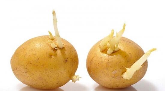 土豆是一种很特别的食物,它淀粉含量高,维生素丰富,既可以作为主食,也可以做成菜。但如果你问100个人,发芽土豆能不能吃,估计100个人都会告诉你,不能!  原因大家都知道了,发芽的土豆有毒。虽然一般都建议发芽土豆要扔掉,但大叔大婶大爷大妈勤俭节约惯了,让他们把发芽土豆扔掉还真舍不得。 所以,发芽土豆真的不能吃吗?是发了一点点芽就不能吃,还是发芽很多才不能吃?有没有办法凑合吃呢?吃了会不会生病,甚至有生命危险? 龙葵素 发芽土豆里面的毒素叫龙葵素,是好多种糖苷生物碱的统称。其中比较有名的是茄碱,它在茄