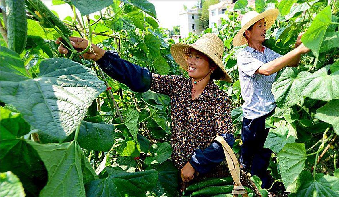 目前,我国农村地区金融体系不健全,金融机构数量少、种类单一,农民创业贷款难比较普遍,影响了脱贫致富的进度。2016年7月9日,由中国小康建设研究会主办,中国小康建设研究会金融委员会(筹)承办的中国农村金融创新发展论坛在京召开。与会人士认为,农村金融是我国金融体系中最为薄弱的环节,发展农村金融,是脱贫攻坚、全面建成小康社会的必然要求。在此,刊登两篇论坛上的发言材料,以期为攻克这一难题提供参考。  刘克崮  在地处闽赣交界的福建省长汀县南坑村,在农村信用社小额贷款的帮助下积极发展生态立体农业,很多农民走上了