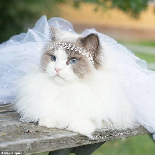 白猫咪睡觉图片大全可爱