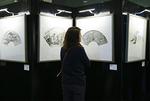 中国扇面画作品展在欧盟总部举行
