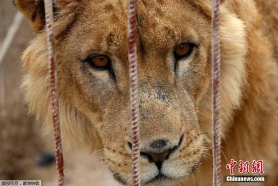 狗和人�y�'��)�al�����:)�h�_muntazah al-nour动物园中的动物因为战争无人照料,多数死于饥饿.
