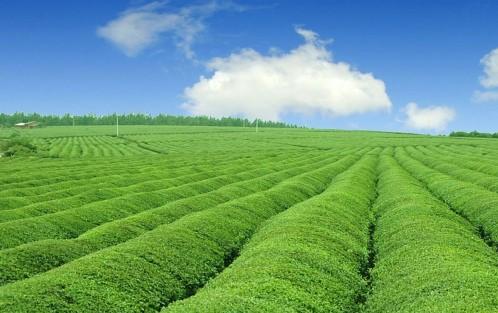 大力推进农业绿色发展图片