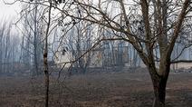葡森林火灾死亡人数升至64人