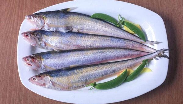 鲥鱼 河鲀 长江三鲜的营养药用价值知多少