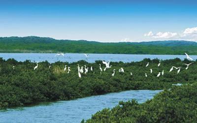海南湿地遭蚕食