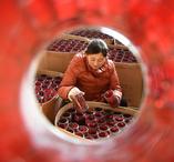 巧手创业助推乡村产业兴旺