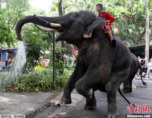 资料图:泰国曼谷,动物园中的大象.