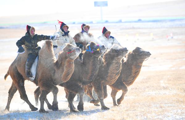 9.你追我赶的赛骆驼jpg