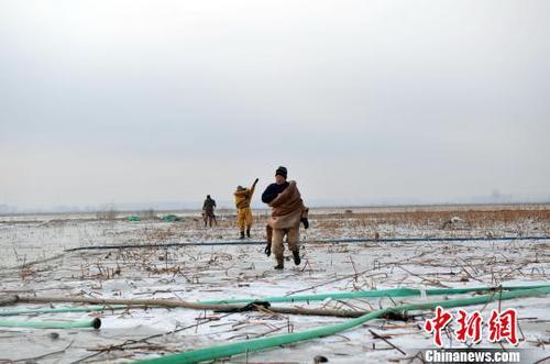 图为挖藕人准备下水工作。 韩冰 摄