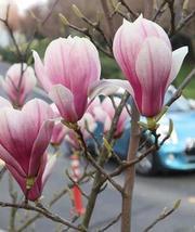 伊斯坦布尔:春回大地百花开