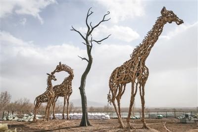 设计者詹姆斯说,长颈鹿是世界上最大的食草动物之一,希望通过用早已