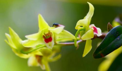 持续推进品牌国际化 植物医生发力日本市场