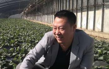 """河北迁安市""""草莓哥""""李佳音: """"种最甜的草莓,建最大的基地"""""""