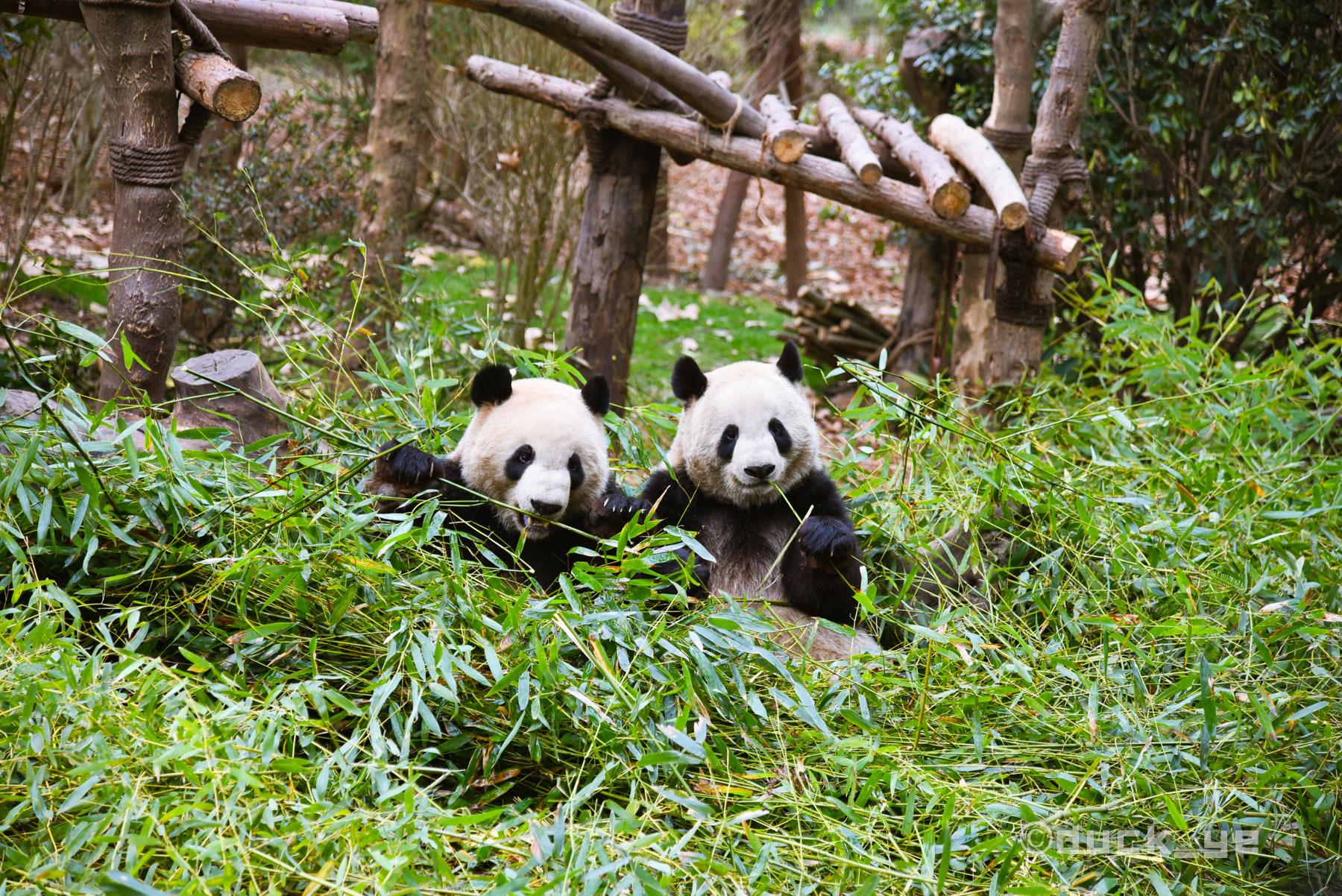 川台共话熊猫文化产业新愿景