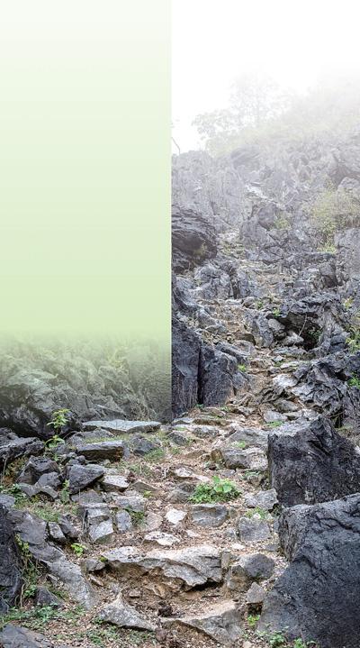  穿山入林 闻声寻猿(保护区里的年轻人·关注生物多样性保护①)