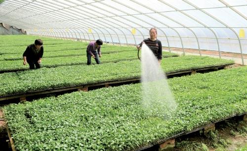 特色蔬菜种植促增收