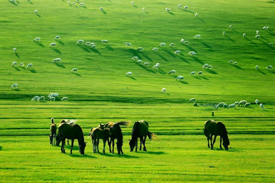 草原保护处在不进则退的关键阶段