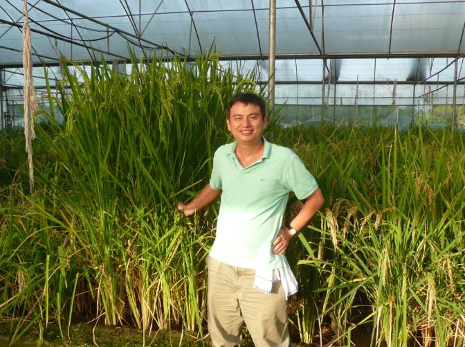 实验水稻60天收获,钱前团队研究再获重要突破