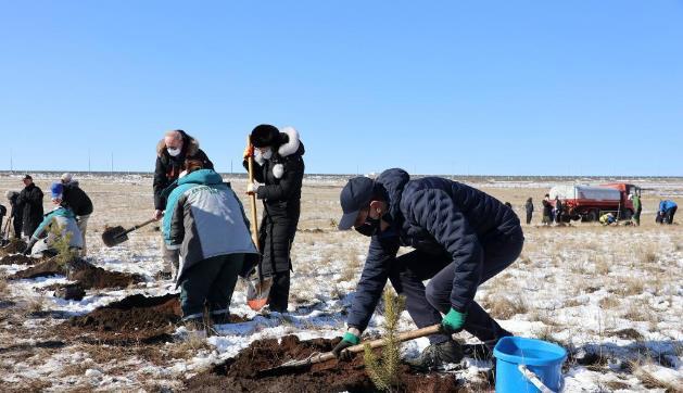 """蒙古国种植""""十亿棵树计划""""全面启动"""