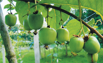 中国重点保护1101种野生植物